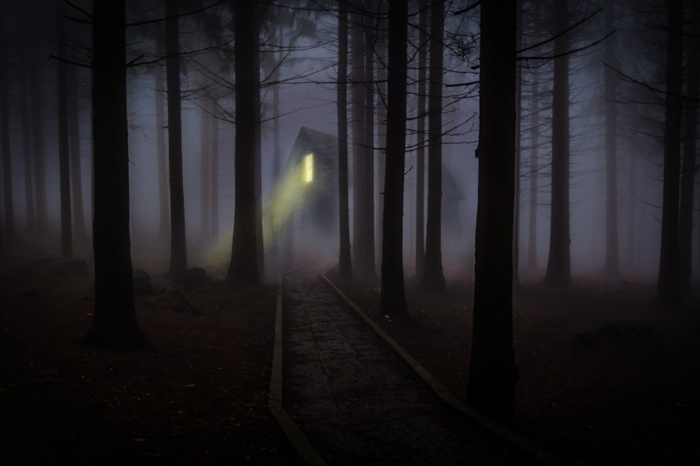 foggy-mist-forest-trees-spooky-haunted-wooden