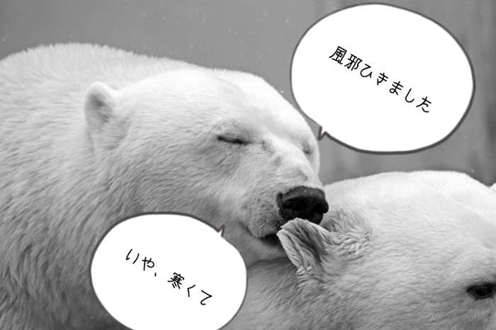 polar-bear-bear-teddy-sleep-lazy-rest-animal